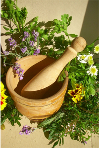 Herbs for Everyday Living